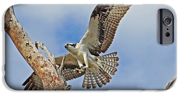 Touch Down - Osprey In Flight IPhone 6s Case