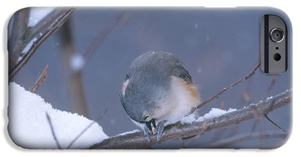 Tufted Titmouse Eating Seeds IPhone 6s Case by Paul J. Fusco