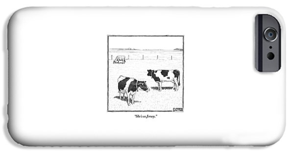 Two Averagely Spotted Cows Looking At A Plain Cow IPhone 6s Case