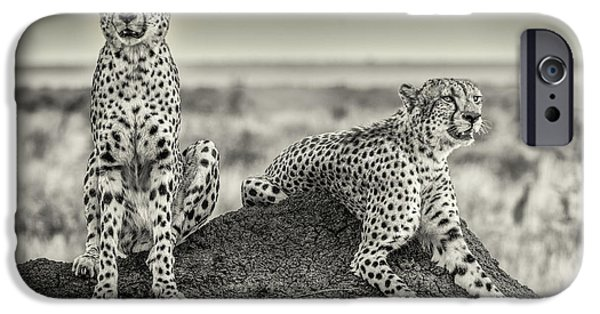 Cheetah iPhone 6s Case - Two Cheetahs Watching Out by Henrike Scheid
