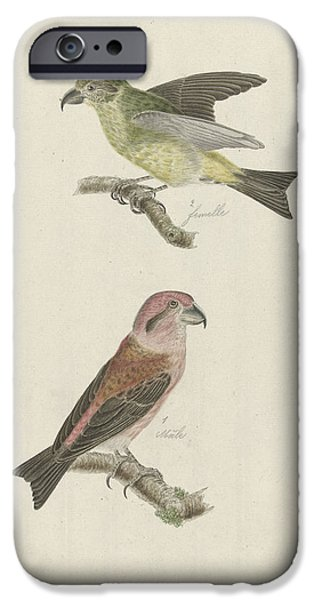 Two Crossbills, Possibly Christiaan Sepp IPhone 6s Case by Quint Lox