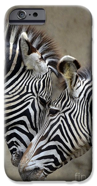 Two Zebras IPhone 6s Case by Mark Newman
