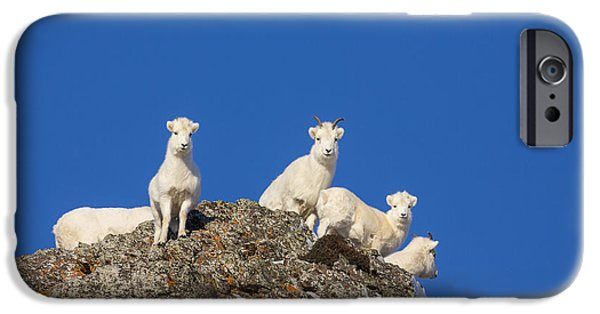 Sheep iPhone 6s Case - Under The Blues Skies Of Winter by Tim Grams