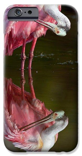 Usa, Florida, Everglades National Park IPhone 6s Case