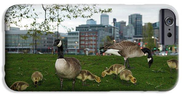 Gosling iPhone 6s Case - Usa, Washington, Seattle, South Lake by Rick A Brown
