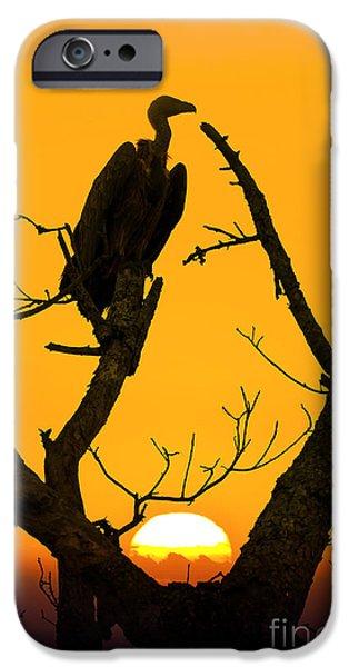 Vulture iPhone 6s Case - Vulture by Delphimages Photo Creations