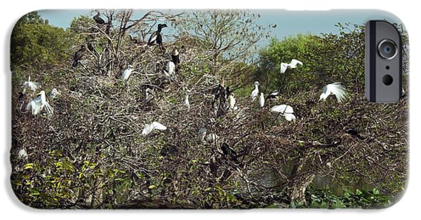 Wading Birds Roosting In A Tree IPhone 6s Case by Bob Gibbons