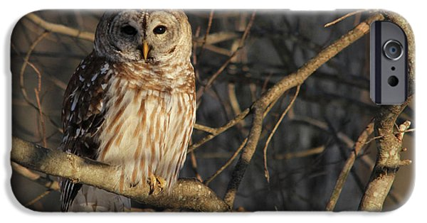 Waiting For Supper IPhone 6s Case