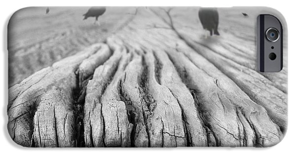 Buzzard iPhone 6s Case - Weathered 3 by Mike McGlothlen