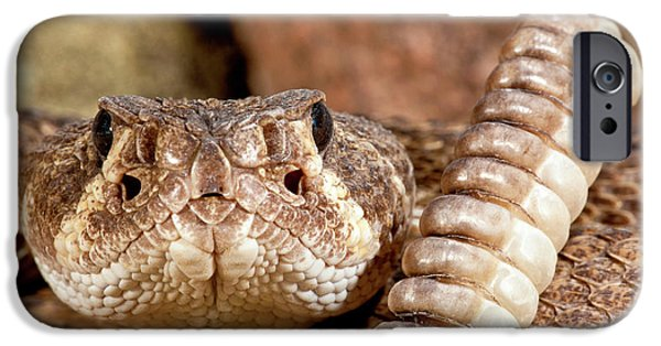 Diamondback iPhone 6s Case - Western Diamondback Rattlesnake by David Northcott