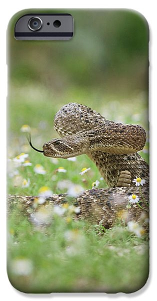 Diamondback iPhone 6s Case - Western Diamondback Rattlesnake by Larry Ditto