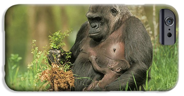 Western Gorilla And Young IPhone 6s Case by M. Watson