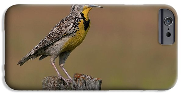 Western Meadowlark.. IPhone 6s Case