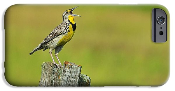 Western Meadowlark IPhone 6s Case by Tony Beck