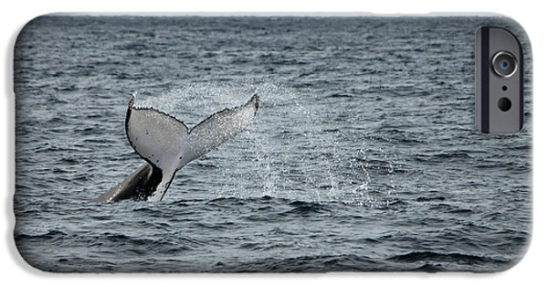 IPhone 6s Case featuring the photograph Whale Of A Time by Miroslava Jurcik