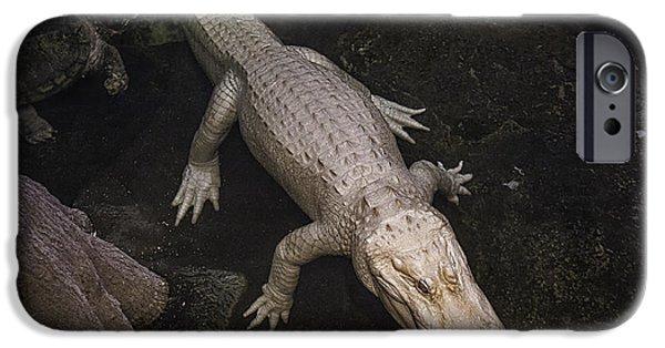 White Alligator IPhone 6s Case