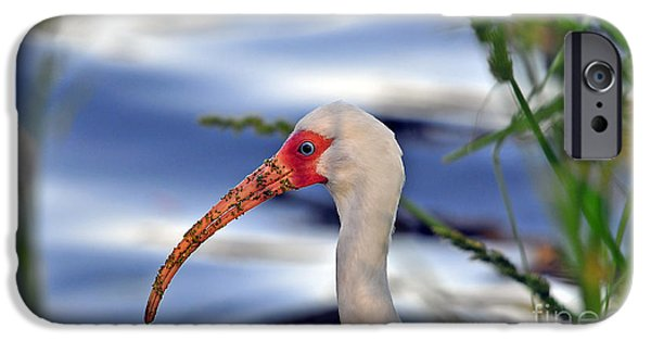Intriguing Ibis IPhone 6s Case by Al Powell Photography USA