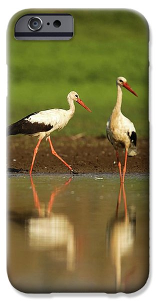 White Stork (ciconia Ciconia) IPhone 6s Case by Photostock-israel
