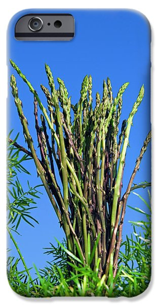 Wild Asparagus (asparagus Acutifolius IPhone 6s Case