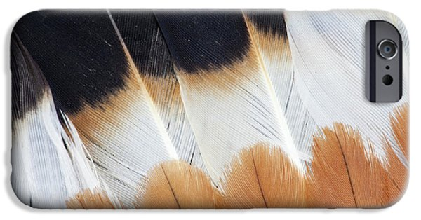 Lapwing iPhone 6s Case - Wing Fanned Out On Northern Lapwing by Darrell Gulin
