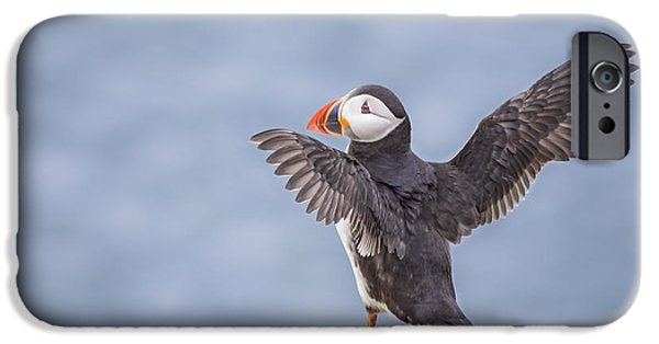Puffin iPhone 6s Case - Wings To Fly  by Evelina Kremsdorf