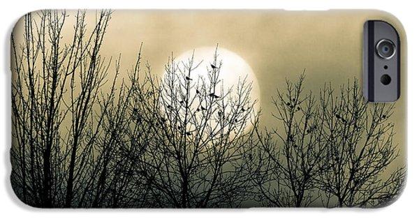 Winter Into Spring IPhone 6s Case by Bob Orsillo