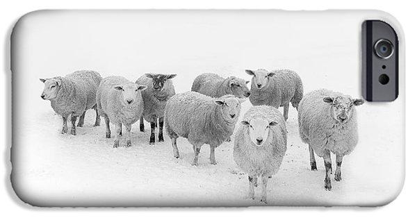 Sheep iPhone 6s Case - Winter Woollies by Janet Burdon
