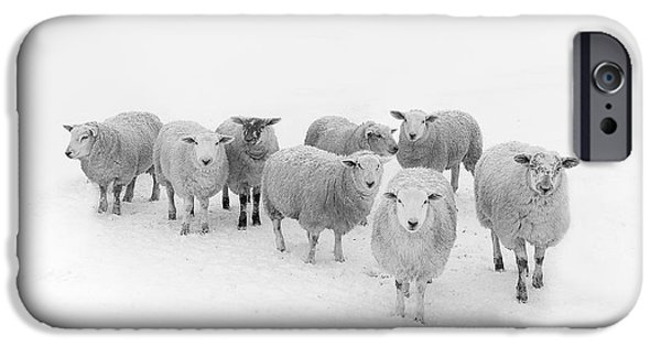 Rural Scenes iPhone 6s Case - Winter Woollies by Janet Burdon
