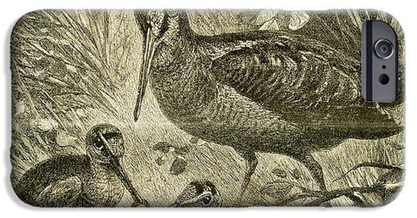 Woodcock Austria 1891 IPhone 6s Case by Austrian School