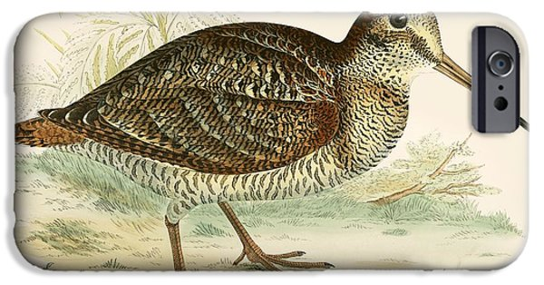 Woodcock IPhone 6s Case by Beverley R Morris