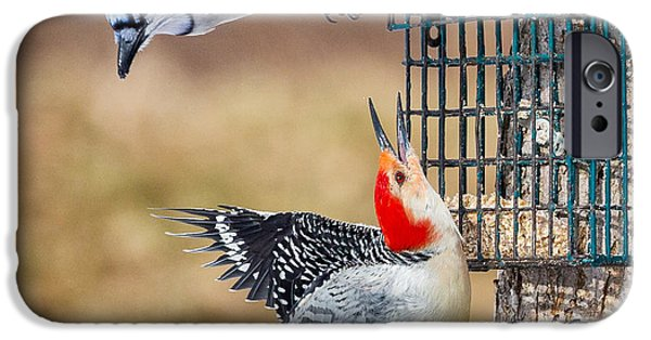 Woodpeckers And Blue Jays Square IPhone 6s Case by Bill Wakeley