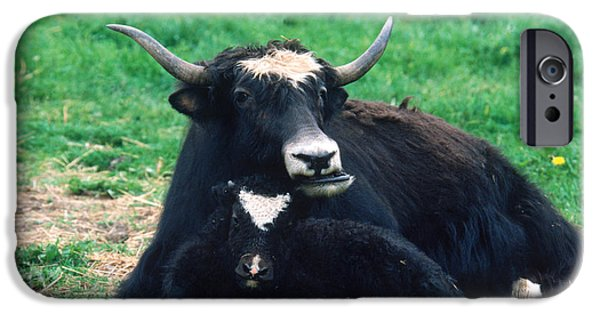 Yak IPhone 6s Case