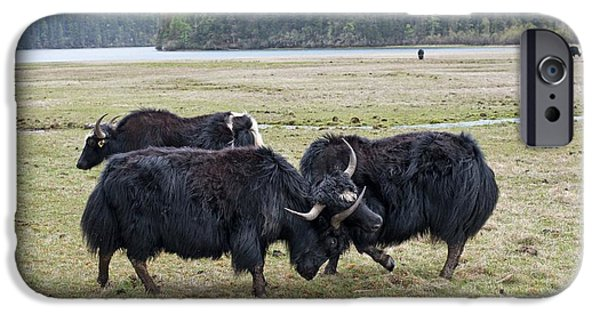 Yak iPhone 6s Case - Yaks Fighting In Potatso National Park by Tony Camacho