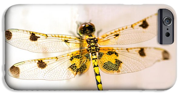 Yellow Dragonfly Pantala Flavescens IPhone 6s Case