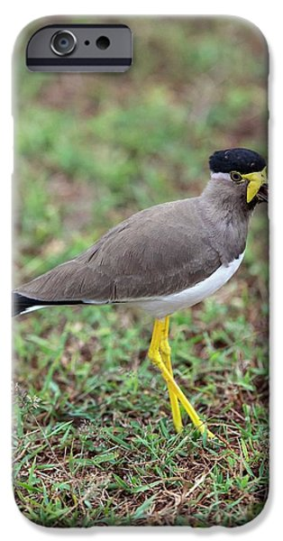 Lapwing iPhone 6s Case - Yellow-wattled Lapwing by Peter J. Raymond