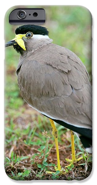 Lapwing iPhone 6s Case - Yellow Wattled Lapwing by Tony Camacho
