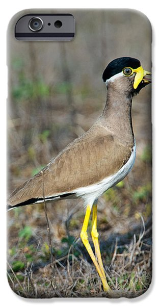 Lapwing iPhone 6s Case - Yellow-wattled Lapwing Vanellus by Panoramic Images