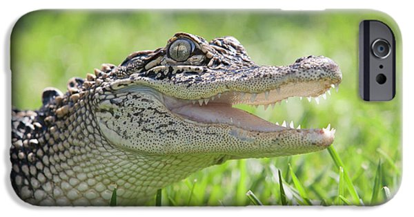 Young Alligator With Mouth Open IPhone 6s Case by Piperanne Worcester