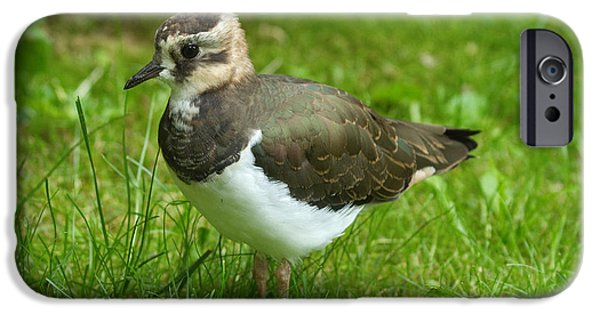 Lapwing iPhone 6s Case - Young Lapwing by Helmut Pieper
