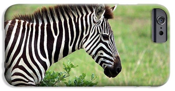 Zebra IPhone 6s Case by Aidan Moran