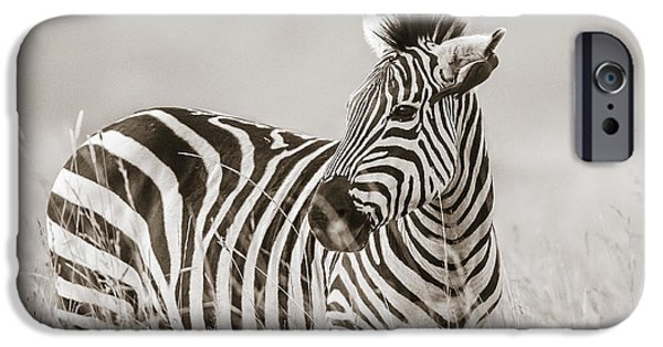 Zebra Masai Mara Kenya IPhone 6s Case