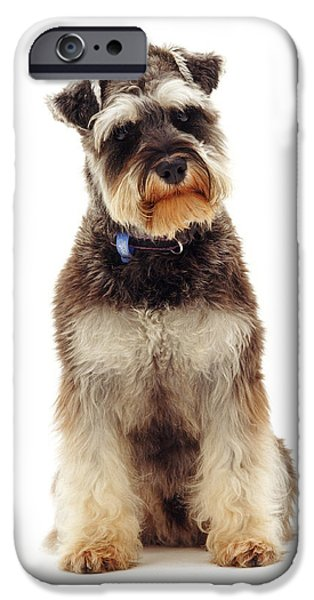 Miniature Schnauzer IPhone Case by Jane Burton