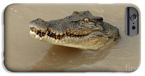 Salt Water Crocodile 3 IPhone 6s Case by Bob Christopher