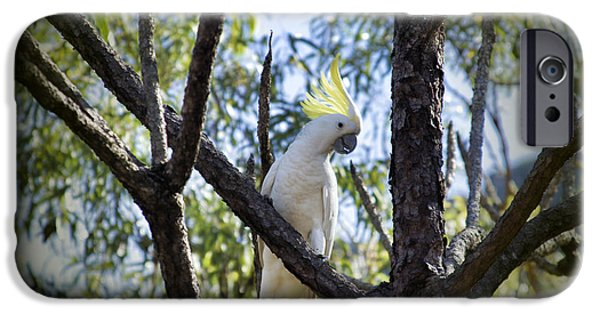 Sulphur Crested Cockatoo IPhone 6s Case by Douglas Barnard