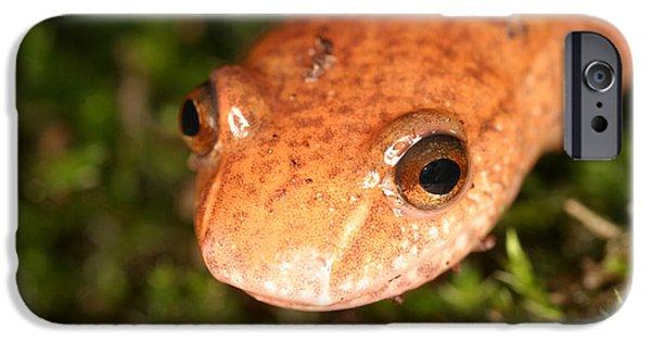 Spring Salamander IPhone 6s Case by Ted Kinsman
