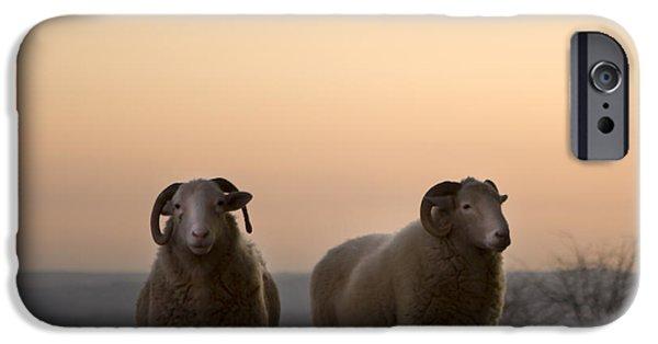 Sheep iPhone 6s Case - The Lamb by Angel Ciesniarska