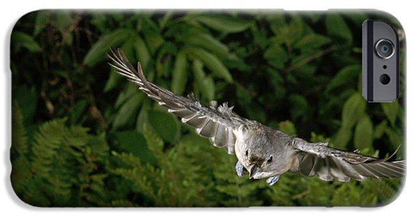 Tufted Titmouse In Flight IPhone 6s Case