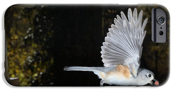 Tufted Titmouse In Flight IPhone 6s Case by Ted Kinsman