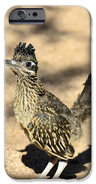 A Baby Roadrunner  IPhone 6s Case