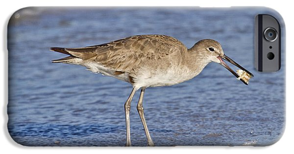 Sandpiper iPhone 6s Case - All In A Day by Betsy Knapp